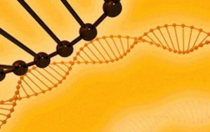 Vision of DNA (8/29/11)