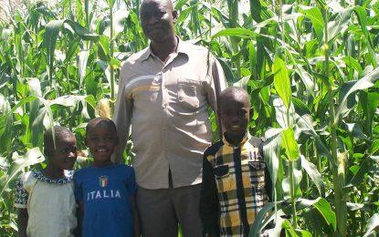 Update on Kenya Maize Plantation